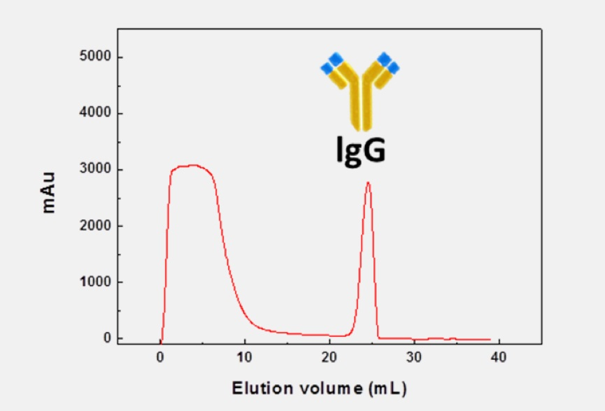 EPRUI protein a media used in hIgg purification from human serum